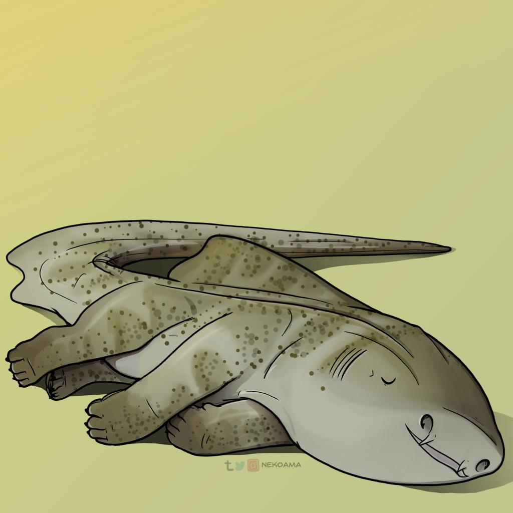sharkpup_zebra